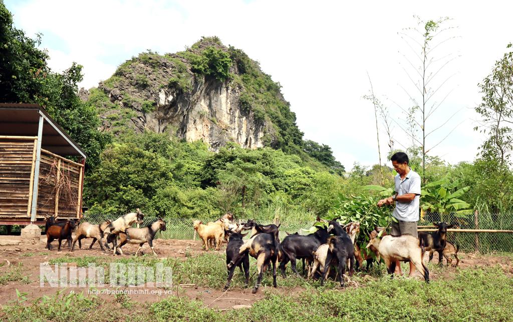 Dê núi Ninh Bình món ăn đặc sản