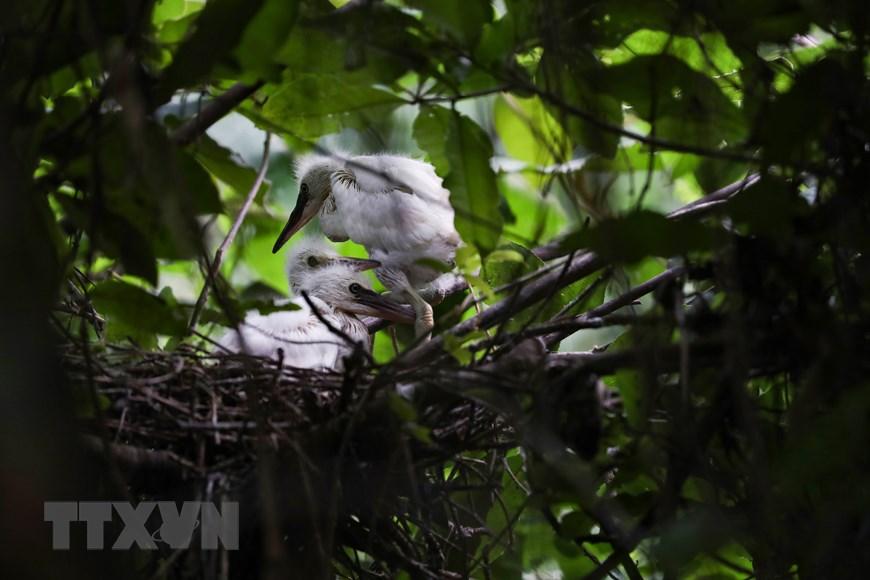 Ninh Bình Tăng cường bảo tồn thiên nhiên giữ gìn sự đa dạng sinh học