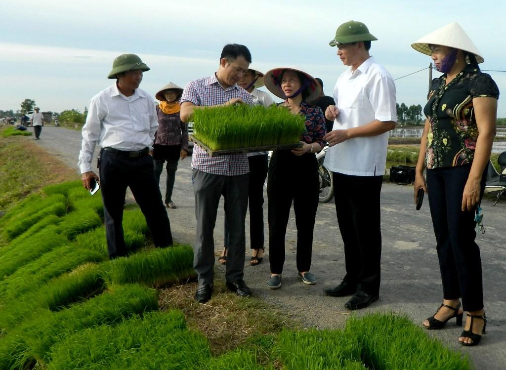 Hội nghị đầu bờ mô hình sản xuất lúa đặc sản, chất lượng cao theo hướng hữu cơ