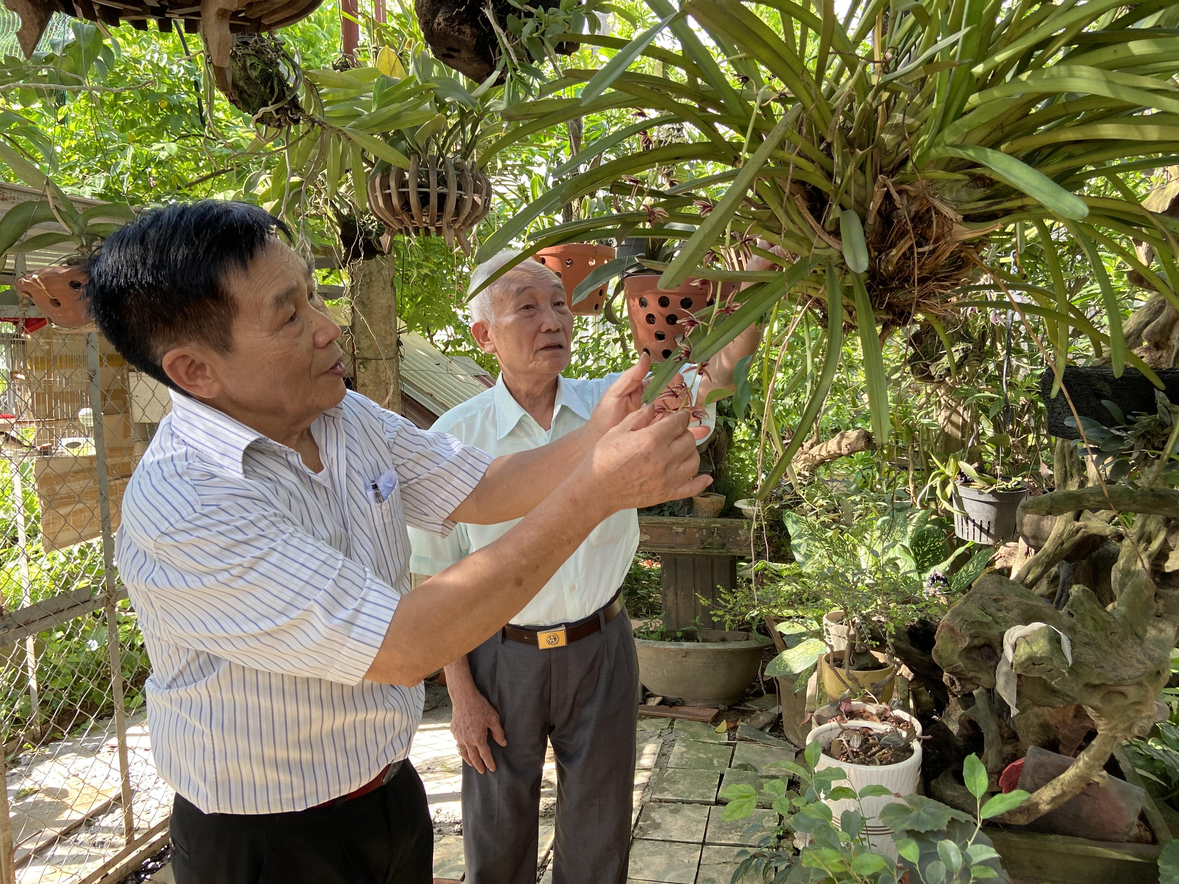 Nở rộ phong trào trồng hoa lan tại các hộ gia đình