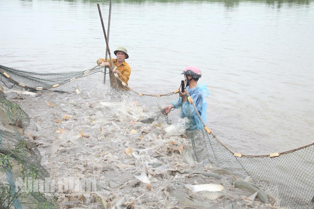 Thúc đẩy liên kết trong nuôi, trồng thủy sản