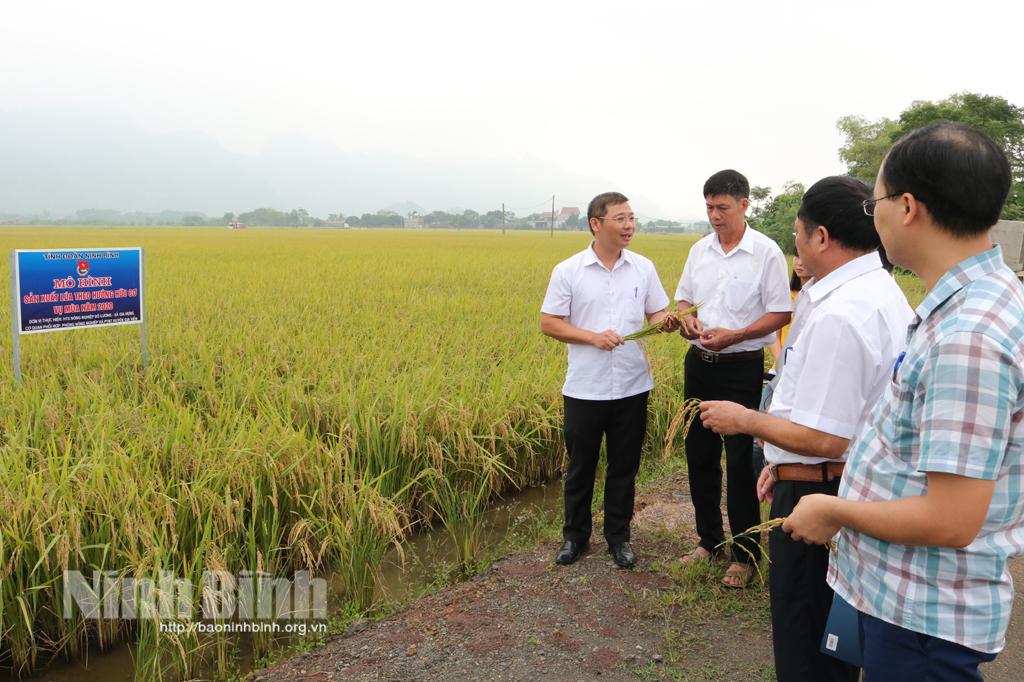 Nghiệm thu mô hình sản xuất lúa theo hướng hữu cơ tại xã Gia Hưng