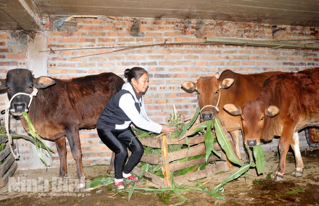 Nhiều biện pháp chống rét bảo vệ sản xuất nông nghiệp