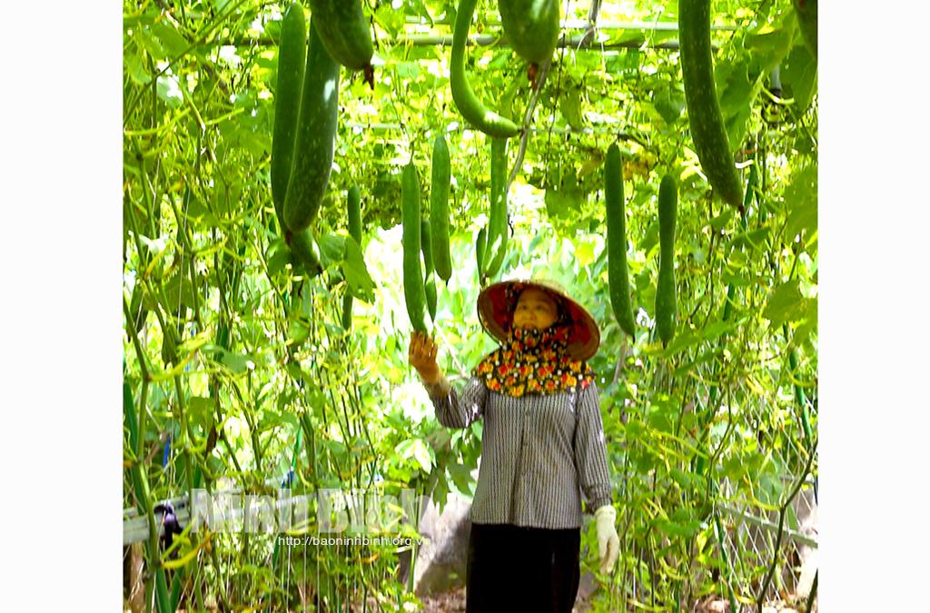 Hiệu quả từ mô hình vườn mẫu ở Khánh Thành